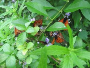 Butterfly sanctuaries